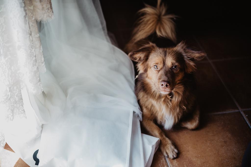 fotografía de boda, fotógrafos de bodas córdoba, bodas Córdoba, novias, perros